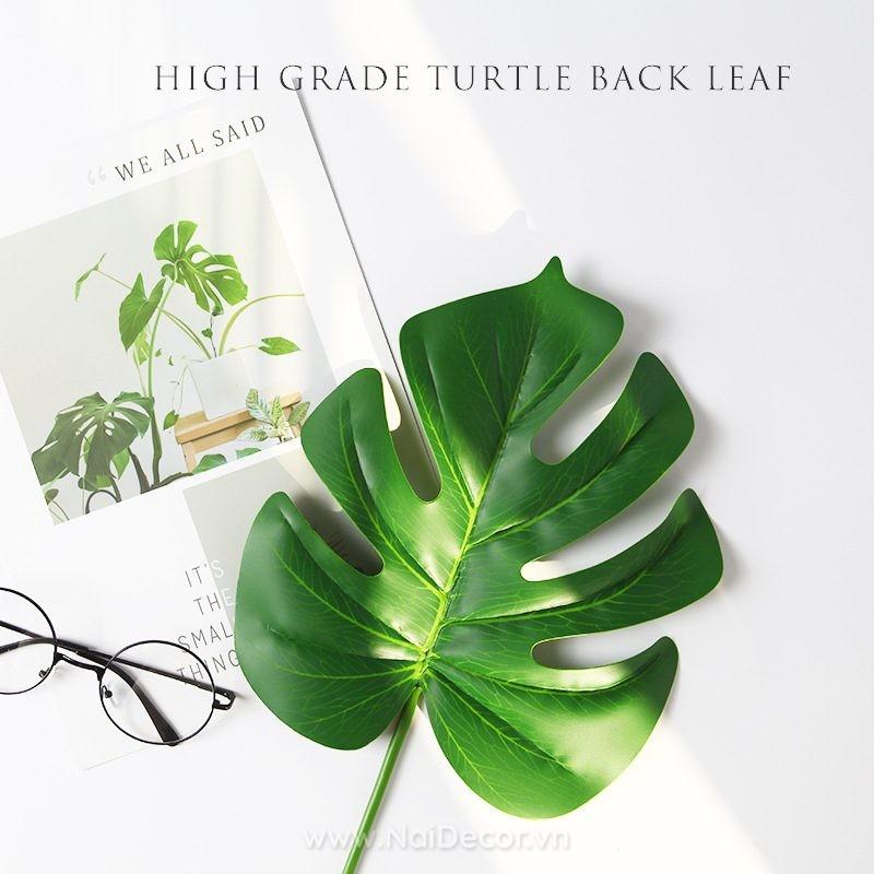 Hoa lá giả chụp ảnh - Lá rùa
