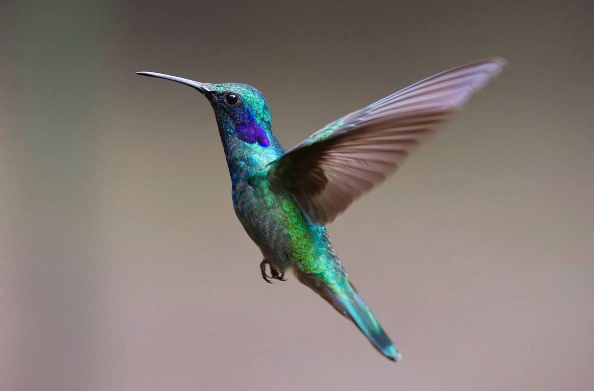 Hummingbird-2139279_1280